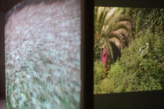 Lise Bardou / vidéo, installation